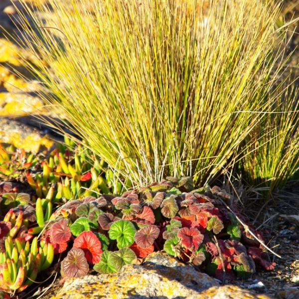 freycinet coastline vegetation